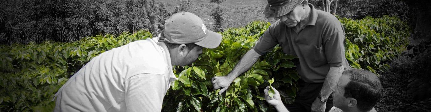 Fair Trade Sustainability